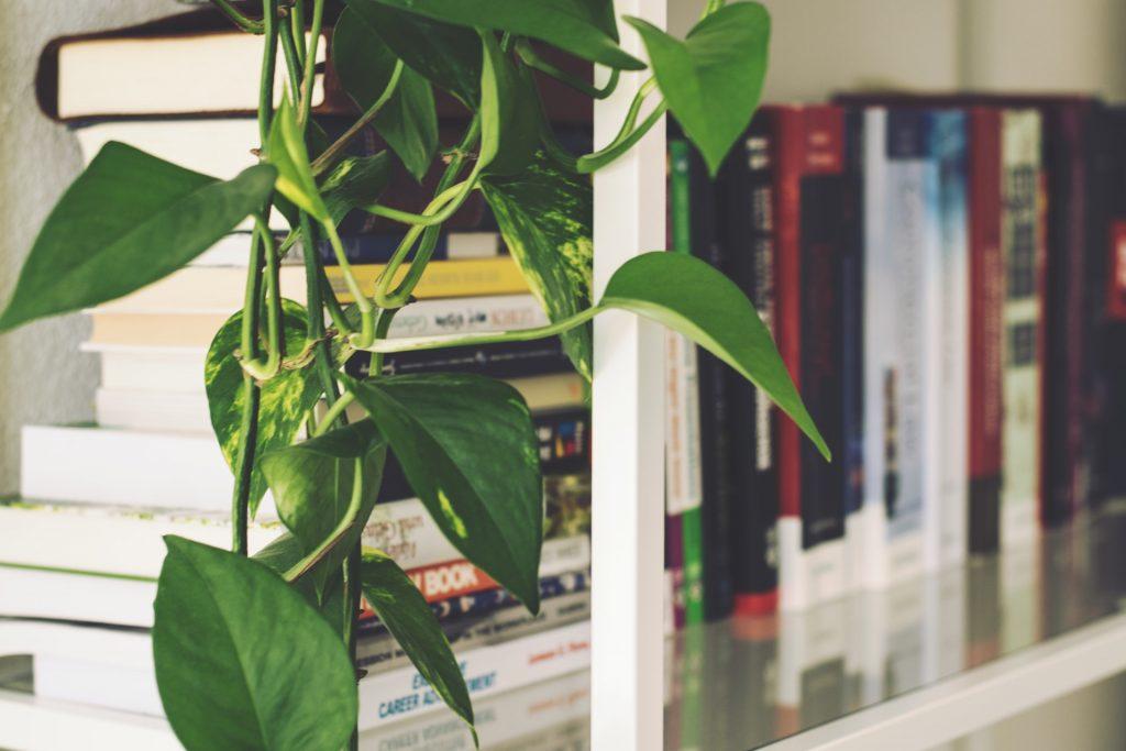 Librería con planta
