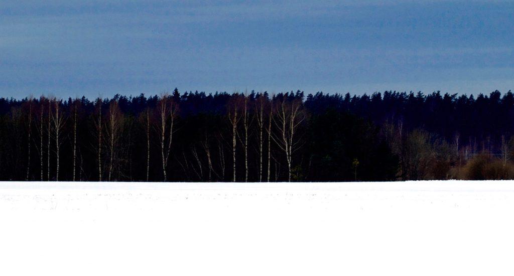 Bosque invernal negro
