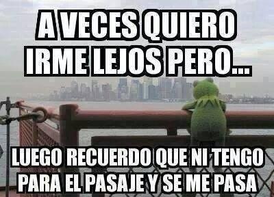 Rana René Kermit Meme